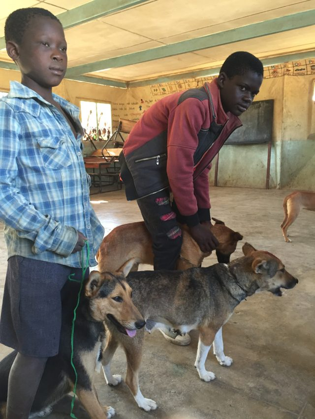 Two boys waiting with their dogs inside a clinic